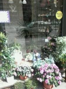 Il Giardino di Concy piante e fiori