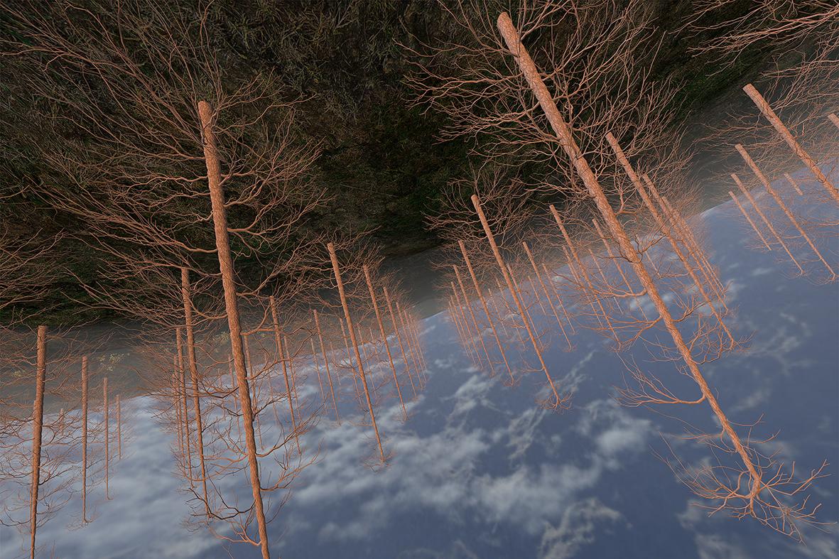 forestscape_fotogramma., June Anne Nuevo